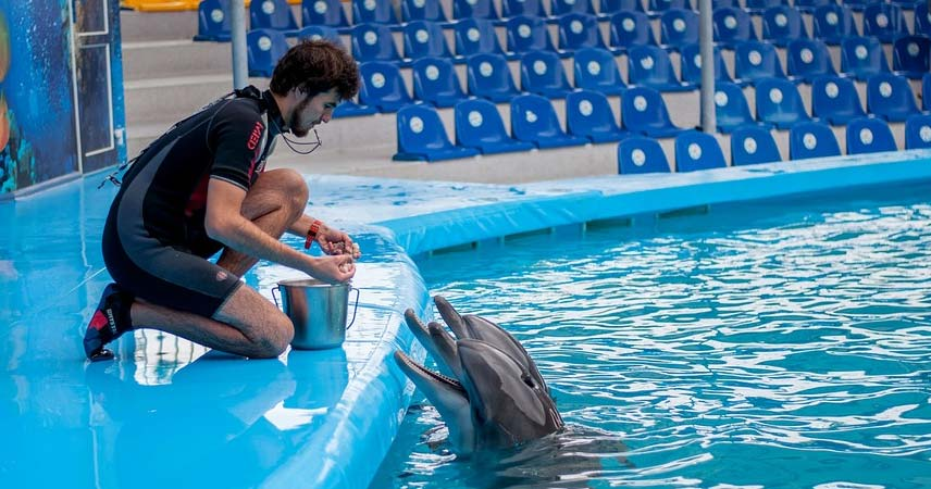 Marmaris Dolphin Park - Swim with dolphins in Marmaris